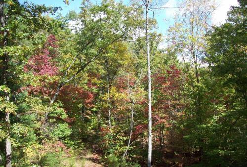 Purple sourwood trees in October